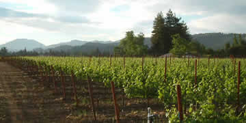 Stanton JB Ranch (Dowdell Lane), St. Helena Vineyard